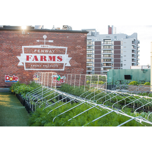 Photo of Red Sox Foundation Picnic In the Park Auction: Farm to Table Dining at Fenway Park