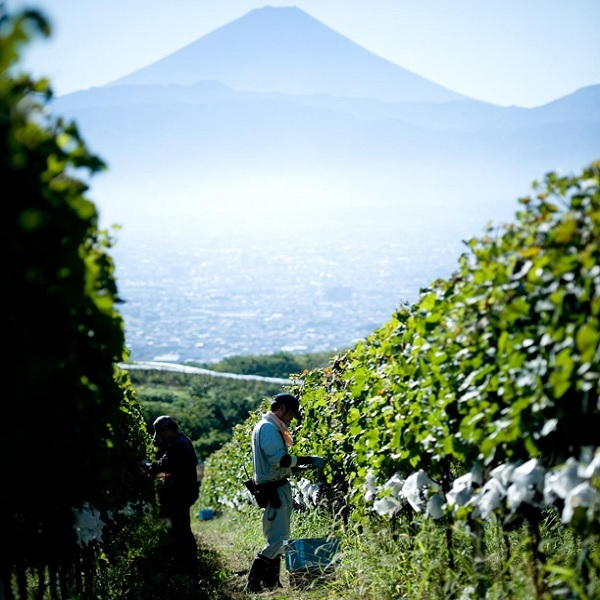 Click to view Discover Japanese Wine Culture.