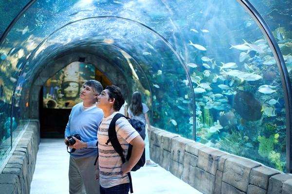 Clickable image to visit Redeem Now: Georgia Aquarium Tickets