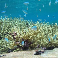 Photo of Coral Reef Excursion in Thailand - click to expand.