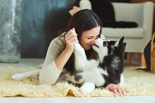 Clickable image to visit Pampered Pets Bundle