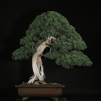 Photo of Become a Bonsai Master with Conrad Tokyo - click to expand.
