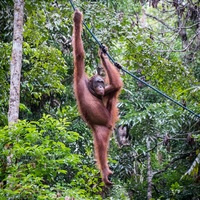 Photo of Rainforest World Music Festival Weekend Experience - click to expand.