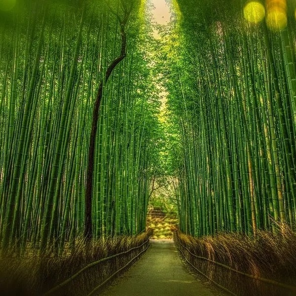 Click to view Culture, Nature and Adventure in Chengdu.