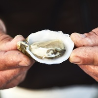 Photo of Clam Picking & Oyster Tasting in Ria Formosa - click to expand.