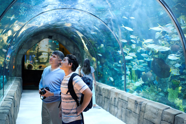 Clickable image to visit Experience the Georgia Aquarium—Two GA Tickets